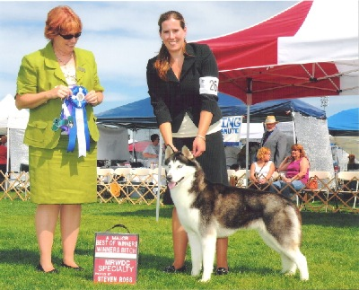 BOW for a 4 point major at the Mount Rainier Working Dog Group, 1st annual show
